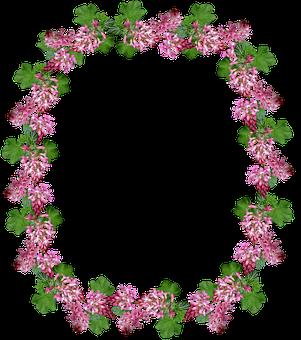Frame, Border, Flowering Currant