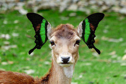 Fantasy, Butterfly, Animal, Nature, Mammal, Fallow Deer