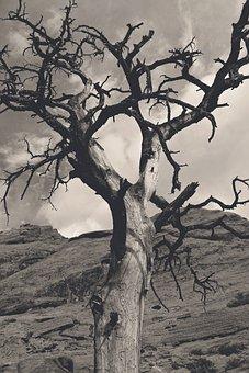 Tree, Nature, Landscape, Dry, Branch, Fire, Burnt