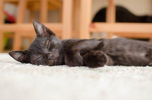 Cat, Black Cat, Rest, Domestic Cat, Animal, Laziness
