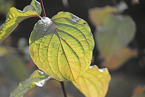 Leaf, Structure, Veins, Leaf Veins, Green, Texture