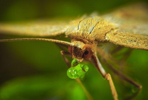 Insect, Nature, Living Nature, Animals, Krupnyj Plan