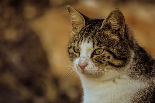 Cat, Stray, Cute, Animal, Nature, Looking, Eyes, Face