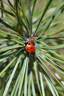 Nature, No Person, Needle, Plant, Outdoor, Evergreen