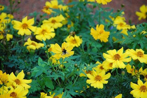 Flower, Summer, Nature, Plant, Garden, Sheet, Outdoors
