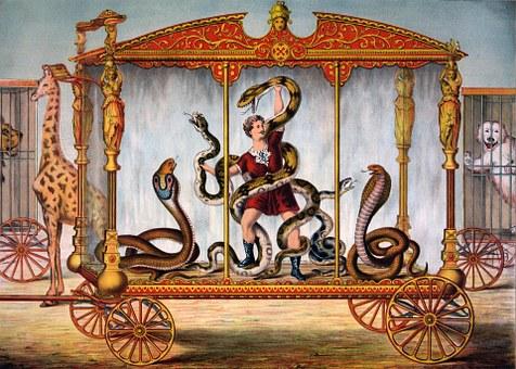 Snake, Snakes, Cobra, Python, Man, Male, Person