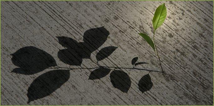 Desktop Background, Nature, Plant, Shadow, Art, Graphic