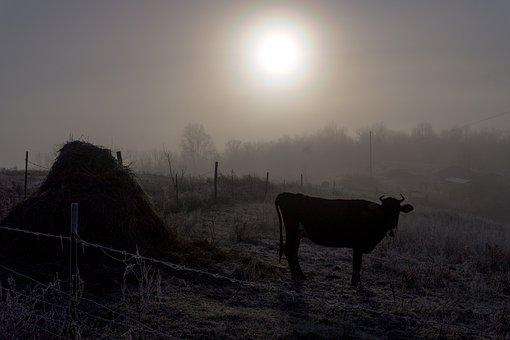 Cow, Dawn, Mammal, Silhouette, Sunset, Horizontal Plane