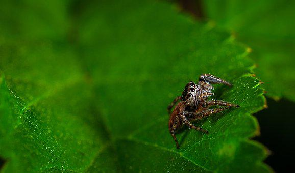 Sheet, Nature, Plant, Environment, Spider, Arachnids