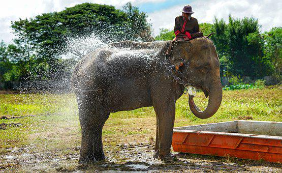 Elephant, Water, Spray, Cool Down, Nature, Mammal