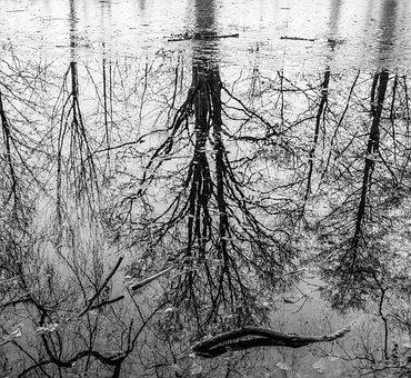 Water, Mirroring, Nature, Lake, Reflection, Landscape