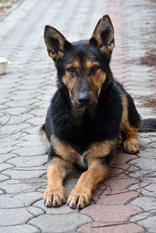 Dog, Animal, My Favorite, Canidae, Cute
