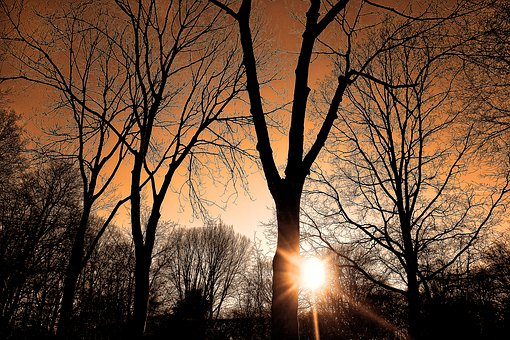 Sunset, Forest, Silhouette, Tree, Bare Tree