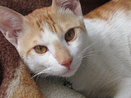 Animal, Cat, Cute, Pet, Kitten, Whisker, Adorable
