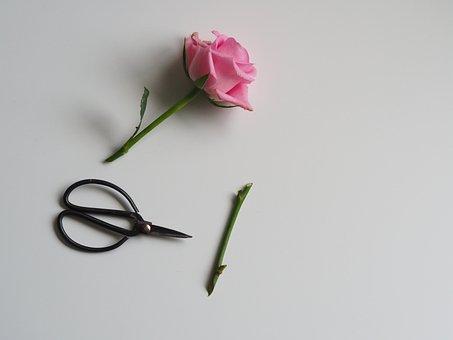 Flower, Nature, Flora, Summer, Desktop, Petal