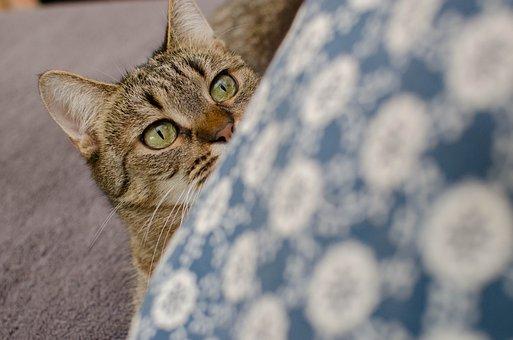 Cat, Bury Cat, Domestic Cat, A Cat With Curiosity