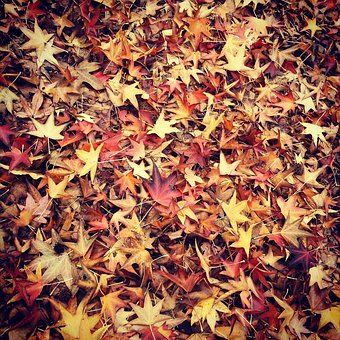 Leaf, Fall, Leaves, Autumn, Read, Outdoors, Natural