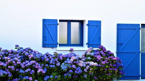 Flower, Summer, Hydrangea, Brittany, Nature, Plant