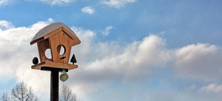 Aviary, Bird Feeder, Sky, Birds, Feed, Food, Bird Seed
