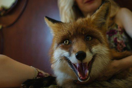 Portrait, Fox, Wild Beast, Animal, Forest Animal, Girl