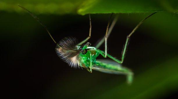 Insect, Animals, Living Nature, Nature, Bespozvonochnoe