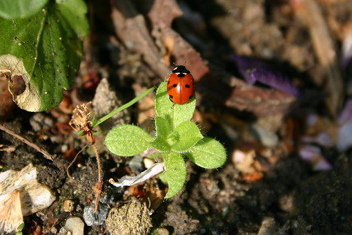 Nature, Plant, Leaf, Insect, Garden, Close, Small