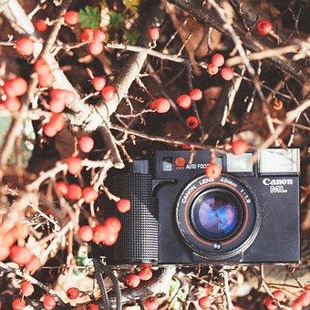 Canon, Winter, Tree, Season, Branch, Leaf, Industry