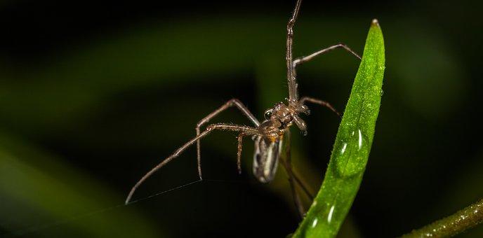 Spider, Bespozvonochnoe, Living Nature, Animals