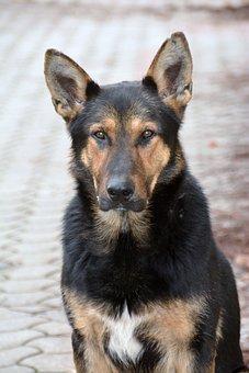 Dog, Mammal, Canidae, My Favorite, Animal
