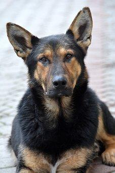 Dog, Mammal, Canidae, Animal, My Favorite
