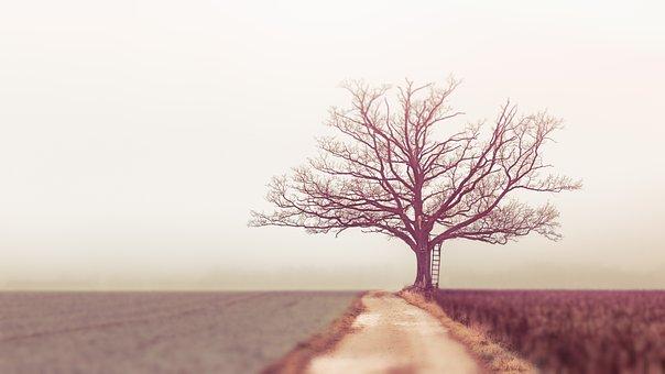 Nature, Landscape, Tree, Dawn, Alone, Morning, Field