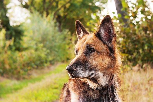 Dog, Mammals, Animal Kingdom, Canidae, Cute, Portrait
