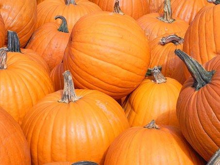 Pumpkin, Halloween, Thanksgiving, Fall, Pasture