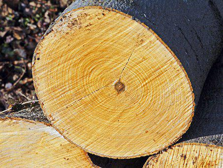 Annual Rings, Log, Like, Sawn, Deforestation