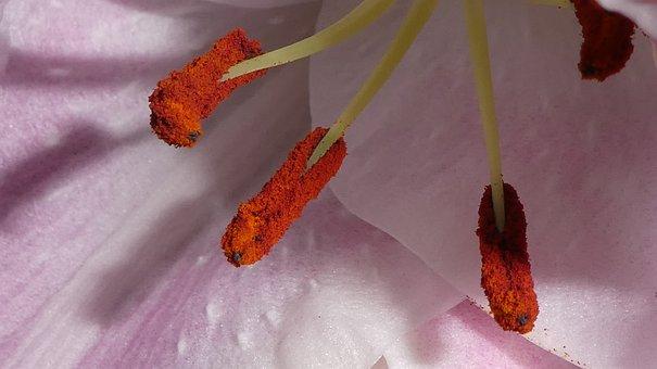 Stamen, Blossom, Bloom, Close