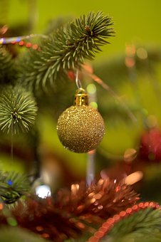 Tree, Christmas, Winter, Branch, Nature, Closeup, Fir