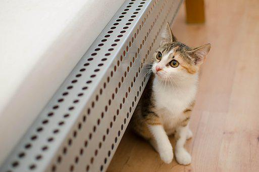 Cat, Domestic Cat, Dachowiec, Small Cat