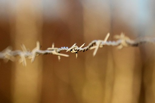 Nature, Barbed Wire, Fence, Pasture