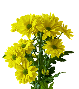 Flower, Plant, Bouquet, Nature, Floral, Marguerite