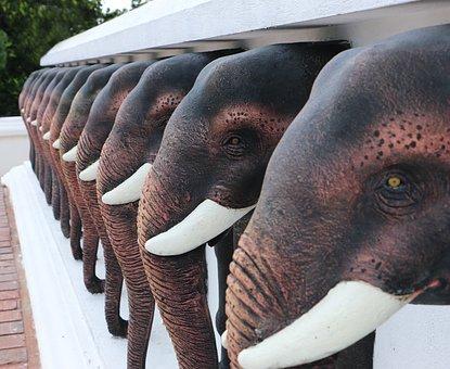 Nature, Wildlife, Animal, Immense, Mammal, Elephant