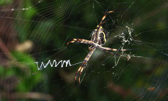Spider, Web, Nature, Outdoors, Arachnid, Colombia