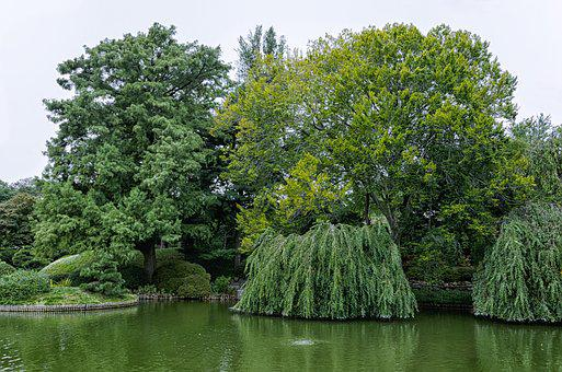 Tree, Nature, Park, Landscape, Wood, Pond, Waters