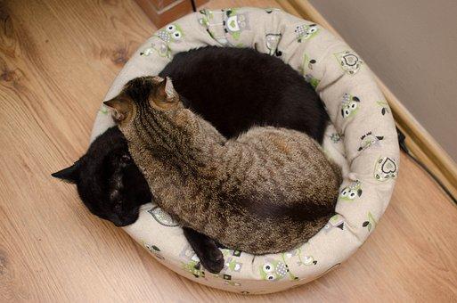 Cats, Cat, Love, Dream, Laziness, Dachowce, Tabby