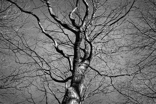 Tree, Tree Top, Trunk, Branch, Winter Tree, Bare Tree