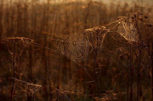 The Haze, Cobwebs, Autumn, Plants, Camp