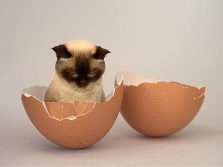 Food, Cute, Petit, Cat, Egg, Animal, Baby Cat