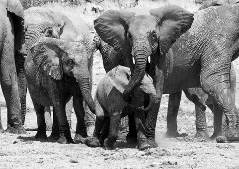 Elephant, Namibia, Etosha, Safari, Africa, Water Hole