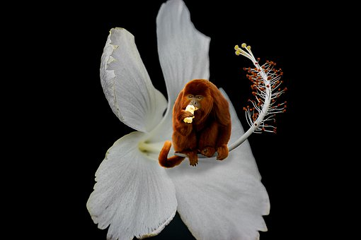 Nature, Flower, Animal World, Monkey, Fantasy