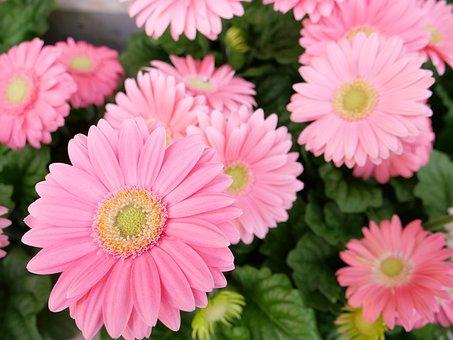 Flower, Flora, Nature, Petal, Floral, Blooming, Leaf