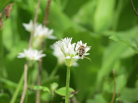 Nature, Sheet, Plant, Flower, Summer, Grass, No One